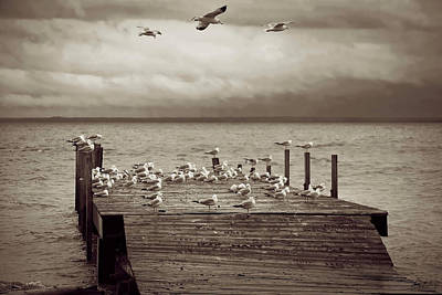 Photograph - Into The Wind by Sally Sperry