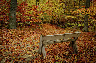 Photograph - Into The Woods by David Heilman