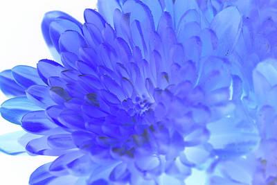Inverted Flower Art Print