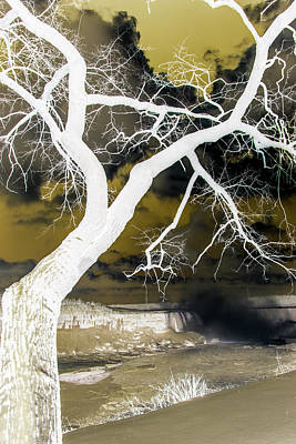 Photograph - Inverted Tree Silhouette by Perggals - Stacey Turner