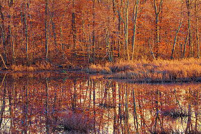 Photograph - Ipswich River Wildlife Sanctuary by Jeff Folger