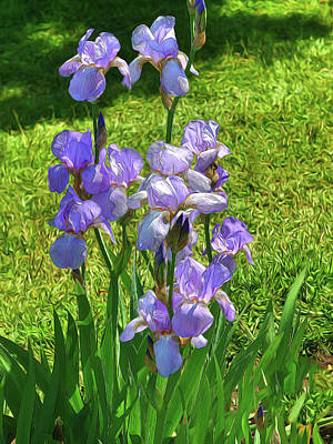 Photo Royalty Free Images - Iris 12 Royalty-Free Image by Allen Beatty