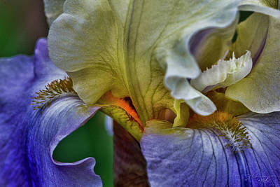 Photograph - Iris Faith Valor And Wisdom by Evie Carrier