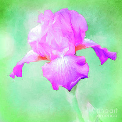 Photograph - Iris Ready To Fly by Anita Pollak