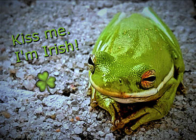 Photograph - Irish Frog by Vincent Autenrieb