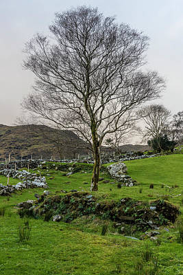 Photograph - Irish Tree  by John McGraw