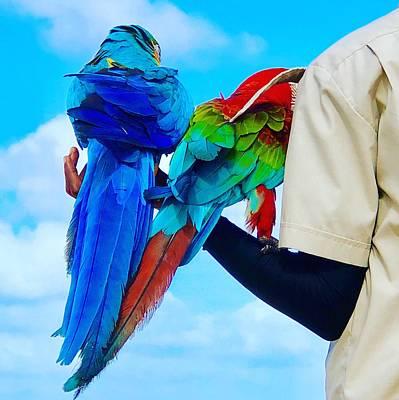 Greenstein Digital Art - Island Birds  by Cindy Greenstein