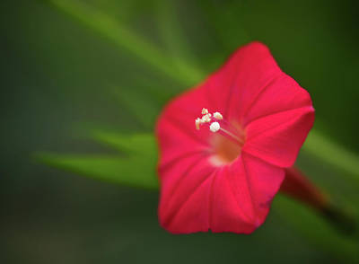 Photograph - Isolated Wave Petunia by Carolyn Derstine