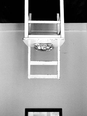 Photograph - Attraction / The Chair Project by Dutch Bieber