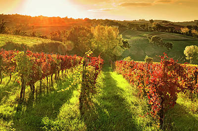 Photograph - Italy, Umbria, Vineyard In Autumn by Slow Images