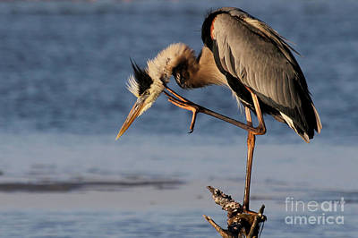 Priska Wettstein Pink Hues - Itchy - Great Blue Heron by Meg Rousher