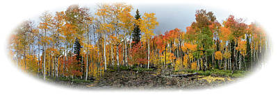 Photograph - It's All About The Trees by Michael Monahan