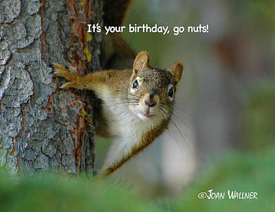 Photograph - It's Your Birthday, Go Nuts by Joan Wallner
