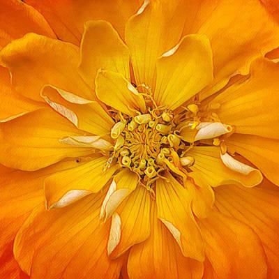 Digital Art - I've Got Sunshine by Cindy Greenstein