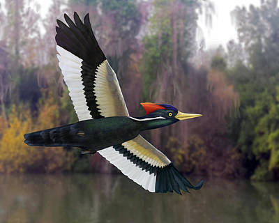 Digital Art - Ivory-billed Woodpecker by Mark Miller
