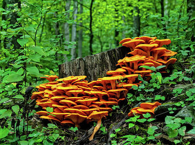 Photograph - Jack O' Lantern Forest by Lara Ellis