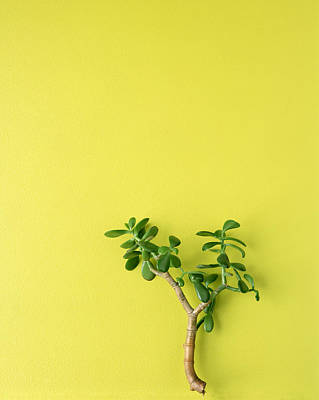Yellow Photograph - Jade Plant by Steve Cohen