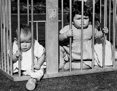 Trapped Photograph - Jailbird Babies by Gerry Cranham