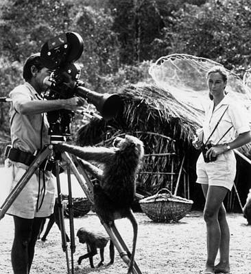 Photograph - Janes Baboons by Hulton Archive