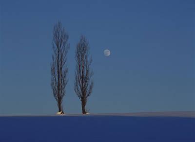 Scenery Photograph - Japan, Hokkaido, Poplar Trees On Snow by Ryoji Takai