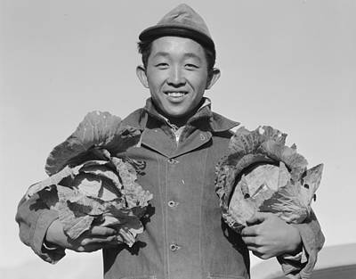 Painting - Japanese Farmer With Cabbages  Manzanar Relocation Center California  1945 Photograph By Ansel Adam by Celestial Images