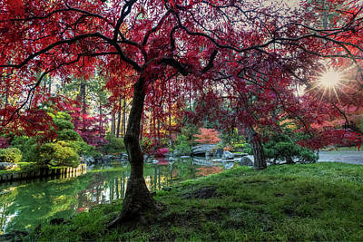Photograph - Japanese Maple Sunburst by Mark Kiver