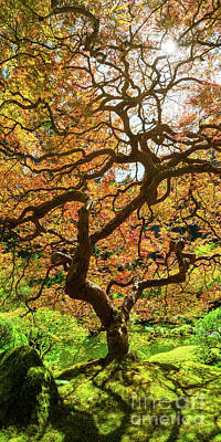 Royalty-Free and Rights-Managed Images - Japanese Maple Tree Portrait Panorama  by Michael Ver Sprill