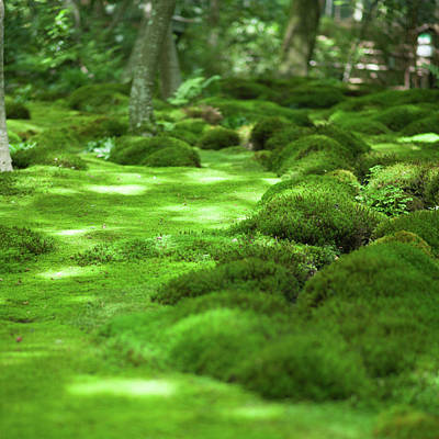 Photograph - Japanese Moss Garden, Kyoto by Ippei Naoi