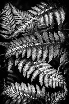 Photograph - Japanese Painted Lady Fern by Tim Gainey