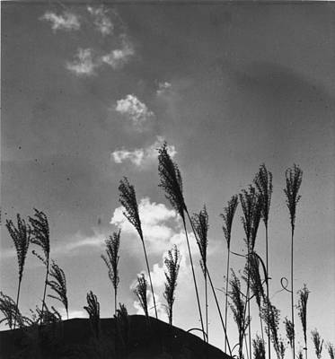 Photograph - Japanese Rice by Three Lions