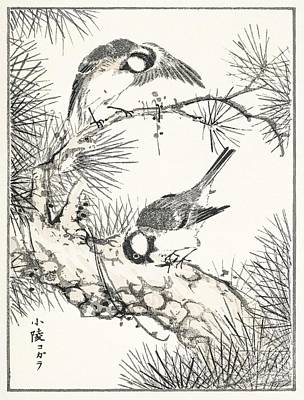 Watercolor Dragonflies - Japanese Willow Tit and Pine Tree illustration from Pictorial Monograph of Birds 1885 by Numata Ka by Celestial Images