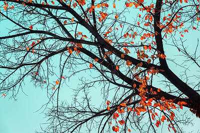 Photograph - Jazzy Autumn Tree - by Georgia Mizuleva