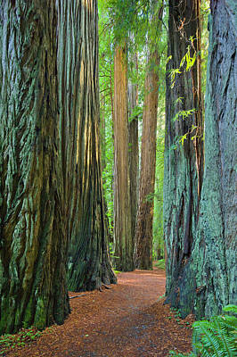 Photograph - Jedediah Smith Redwoods State Park, Ca by Eastcott Momatiuk