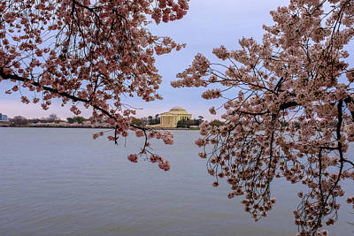 Photograph - Jefferson Memorial And The Cherry Blossoms by Doug Ash