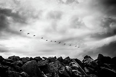 Photograph - Jetty Flight by David C Hagerman
