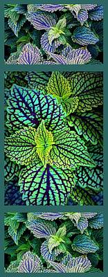 Photograph - Coleus Triptych Panel by Jessica Jenney