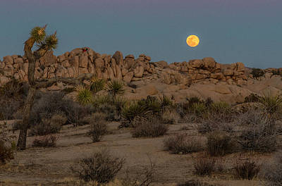 Photograph - Joshua Tree And Moon by Matthew Irvin