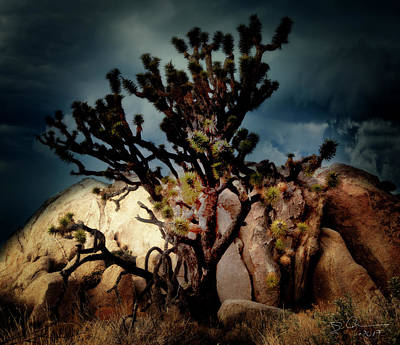 Photograph - Joshua Tree At Midnight by Evie Carrier