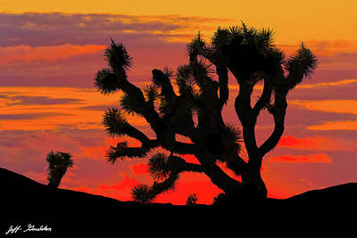 Joshua Tree At Sunset Art Print