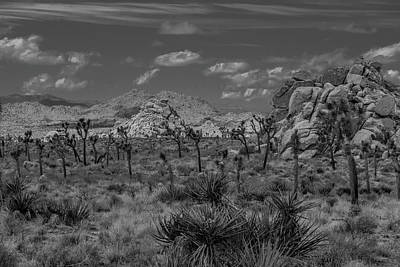 Photograph - Joshua Tree In Black And White by Matthew Irvin