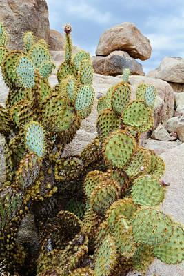 Photograph - Joshua Tree National Park Cactus Portrait by Kyle Hanson