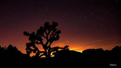 Photograph - Joshua Tree National Park by Tim Kathka