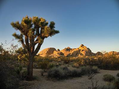Photograph - Joshua Tree Sunset by Martin Gollery
