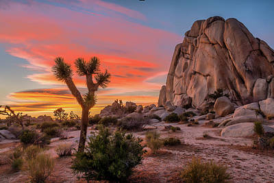 Landscapes Royalty-Free and Rights-Managed Images - Joshua Tree Sunset by Peter Tellone