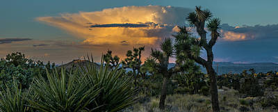 Photograph - Joshua Tree Thunder by Matthew Irvin