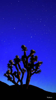Photograph - Joshua Tree Under The Stars by Tim Kathka