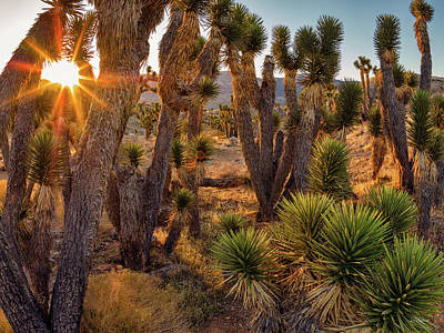 Joshua Trees Art Print by Leland D Howard