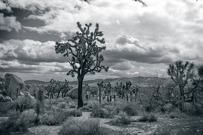 Photograph - Joshua Trees by Sandra Selle Rodriguez