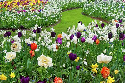 Photograph - Joyful Blooms Of Spring Flowers In Keukenhof by Jenny Rainbow