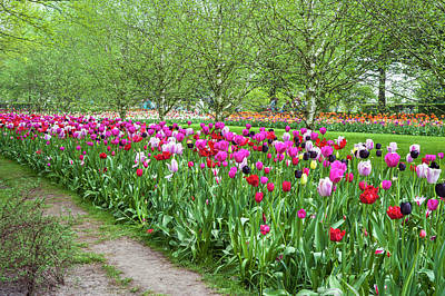 Photograph - Joyful Spring Tulips Of Keukenhof by Jenny Rainbow